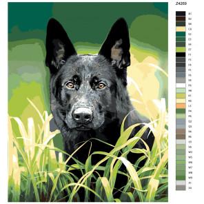 Раскладка Черный пес Раскраска по номерам на холсте Живопись по номерам Z-Z4269