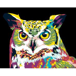 Красочная сова Раскраска картина по номерам на холсте Z-Z101100944