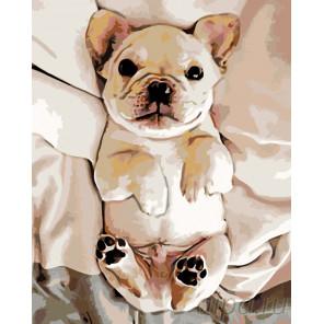 Ласковый щенок Раскраска картина по номерам на холсте Z-z4742