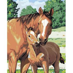 Забота о жеребенке Раскраска картина по номерам на холсте KTMK-52879