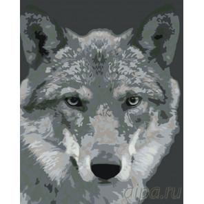 Серый волк Раскраска по номерам на холсте Живопись по номерам KTMK-351313