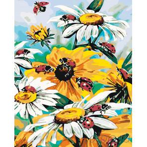 Садовые ромашки Раскраска по номерам на холсте Живопись по номерам KTMK-006955