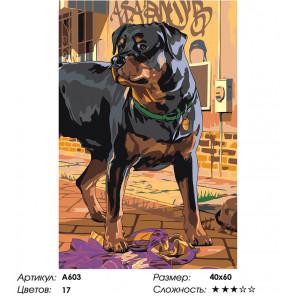 Сложность и количество цветов Ротвейлер на прогулке Раскраска картина по номерам на холсте A603