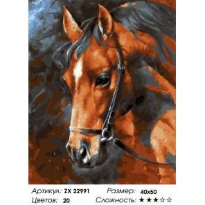 Сложность и количество цветов Голова лошади Раскраска картина по номерам на холсте ZX 22991