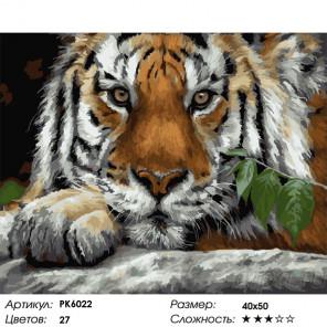 Сложность и количество цветов Пронзительный взгляд Раскраска картина по номерам на холсте PK6022