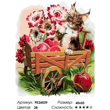 котенок в тележке раскраска картина по номерам на холсте Pk26039