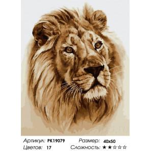 Сложность и количество цветов Взгляд льва Раскраска картина по номерам на холсте PK19079