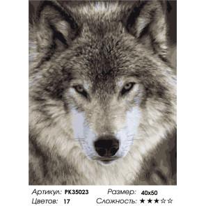 Сложность и количество цветов Одинокий волк Раскраска картина по номерам на холсте PK35023