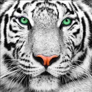 Портрет белого тигра Алмазная вышивка мозаика АЖ-1788