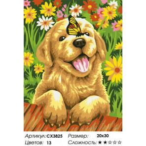 Сложность и количество цветов Щенок садовника Раскраска картина по номерам на холсте CX3825
