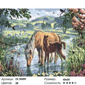 Сложность и количество цветов Лошадь и жеребенок Раскраска картина по номерам на холсте ZX 20209