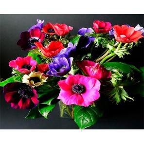 Яркие цветы Раскраска картина по номерам на холсте GX30550