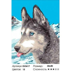 Сложность и количество цветов На Аляске Раскраска картина по номерам на холсте EX5617