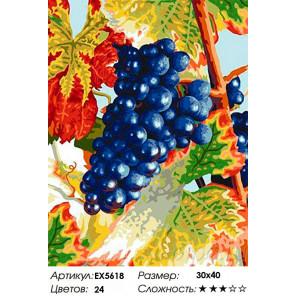 Сложность и количество цветов Виноград Раскраска картина по номерам на холсте EX5618