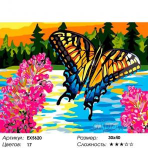 Сложность и количество цветов Бабочка Раскраска картина по номерам на холсте EX5620