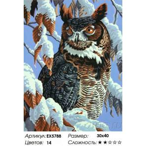 Сложность и количество цветов Грозный филин Раскраска картина по номерам на холсте EX5788