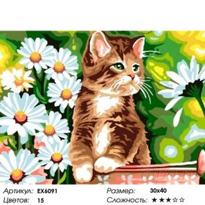 Сложность и количество цветов Котик в ромашках Раскраска картина по номерам на холсте EX6091