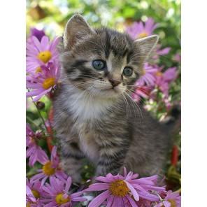 Серый котенок Раскраска картина по номерам на холсте с цветной схемой KK0006