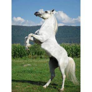 Белый конь Раскраска картина по номерам на холсте с цветной схемой KK0017