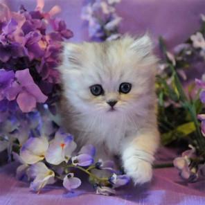Котенок в сиреневых цветах Раскраска картина по номерам на холсте KH0387