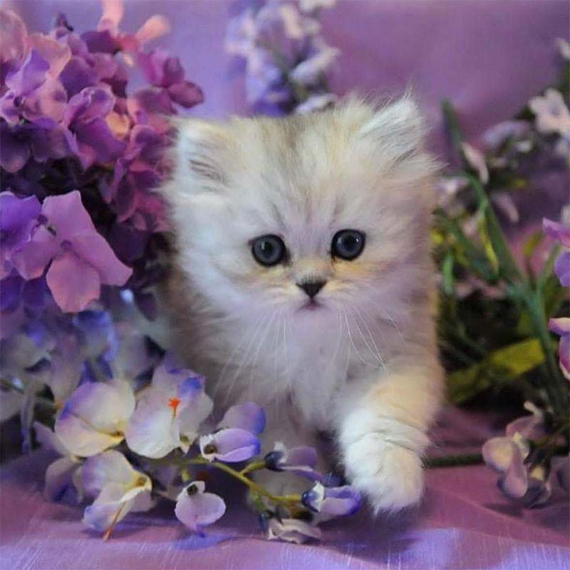 низ приходится картинки котенок с цветами долго