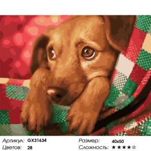 Сложность и количество цветов Грустный взгляд Раскраска картина по номерам на холсте GX31634