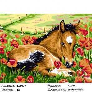 Сложность и количество цветов Жеребёнок среди цветов Раскраска картина по номерам на холсте EX6079