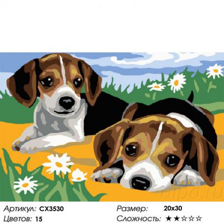 Сложность и количество цветов Щенки на лужайке Раскраска картина по номерам на холсте CX3530