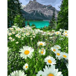 Ромашки на фоне озера Раскраска картина по номерам на холсте Z-GX29451
