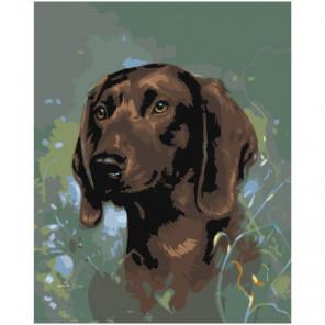 Коричневый пёс Раскраска картина по номерам на холсте