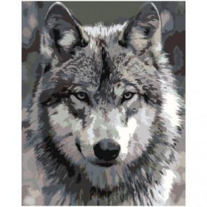 Серый волк Раскраска картина по номерам на холсте