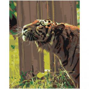 Тигр Раскраска картина по номерам на холсте