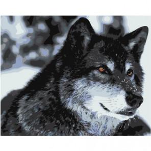 Волк 100х125 Раскраска картина по номерам на холсте