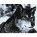 Волк Раскраска картина по номерам на холсте