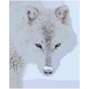 Полярный волк 80х100 Раскраска картина по номерам на холсте