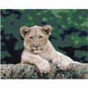 Довольный львенок Раскраска картина по номерам на холсте