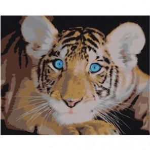 Голубоглазый тигренок Раскраска картина по номерам на холсте