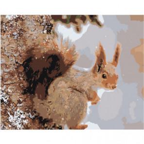 Белка Раскраска картина по номерам на холсте