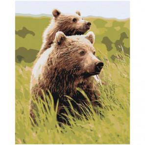 Бурые медведи в поле Раскраска картина по номерам на холсте
