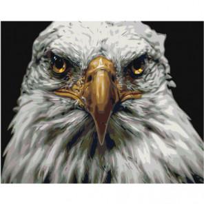 Голова орла Раскраска картина по номерам на холсте