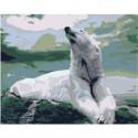 Белый медведь на скале Раскраска картина по номерам на холсте
