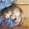 Кот спит на тельняшке 100х100 Раскраска картина по номерам на холсте
