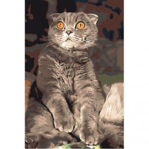 Удивленный кот Раскраска картина по номерам на холсте