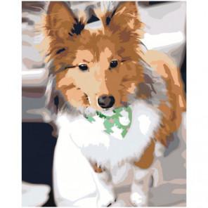 Собака Колли Раскраска картина по номерам на холсте