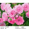 Роза зе фейри Раскраска картина по номерам на холсте