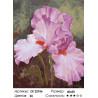 Розовый ирис Раскраска картина по номерам на холсте