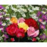 Клумба с цветами Раскраска картина по номерам на холсте