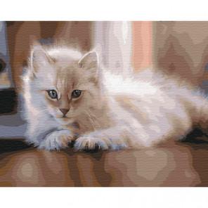 Пушистый кот Раскраска картина по номерам на холсте