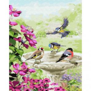 Синички у водицы Раскраска картина по номерам на холсте