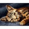 Котенок Раскраска картина по номерам на холсте